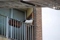 Kattennet bevestigen balkon