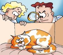 Katten info