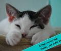 Kitten-van-de-dag: Dudley, een echte knuffel