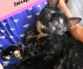 Kitten-van-de-dag: Onyx, ondeugend en houdt van eten