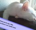 Kitten-van-de-dag: Malo, lekkere luie knuffel kater
