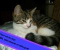 Kitten van de dag: Mara, Ondeugend en Ondernemend.