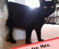 Kat-van-de-dag: Mora, Lief en Zorgzaam