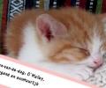 Kitten-van-de-dag: O'Malley, Ondeugend en avontuurlijk