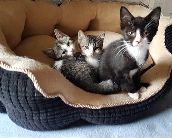 Rover, Mick en Milou